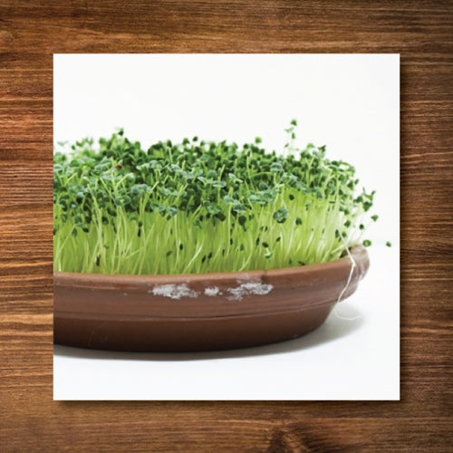 Black Chia Sprouting Seeds - Certified Organic