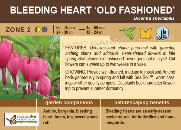 Bleeding Heart, Old Fashioned (Live Plant)