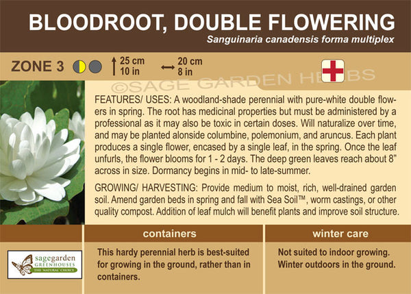 Bloodroot 'Double Flowering' (Live Plant)