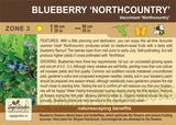 Blueberry 'Northcountry' (Live Plant)