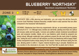 Blueberry 'Northsky' (Live Plant)