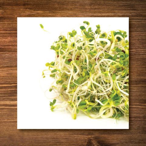 Broccoli-Brassica Blend Sprouting Seeds - Certified Organic