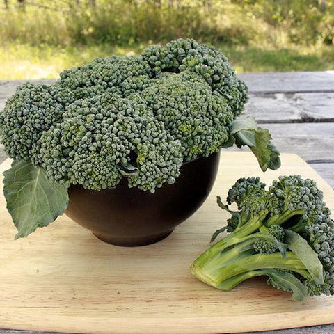 Broccoli, Waltham Organic Seeds
