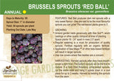 Brussels Sprouts 'Red Ball' (Live Plant)
