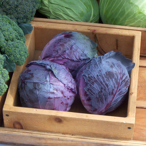 Organic Red Express Cabbage