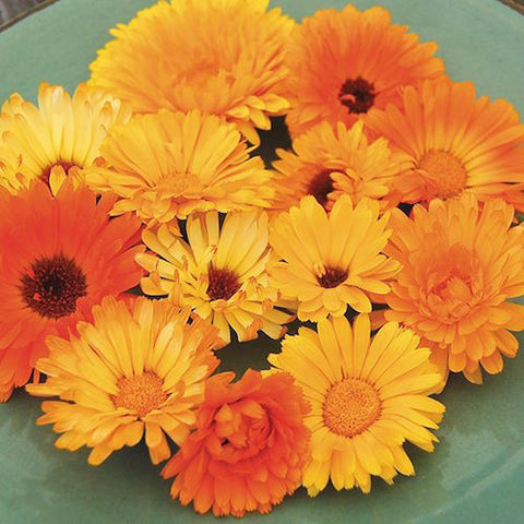 Calendula, Pacific Beauty Organic Seeds