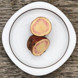Seed Potato - Candy Cane (Certified Organic)