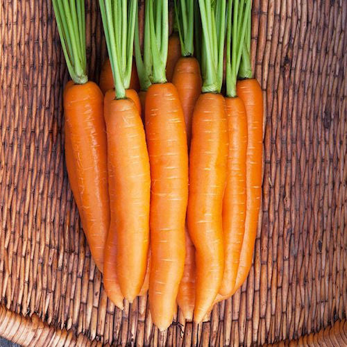Carrot, Negovia Organic Seeds