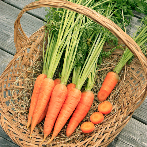 Seeds - Carrot, Red Cored Chantenay OG Jumbo Pack