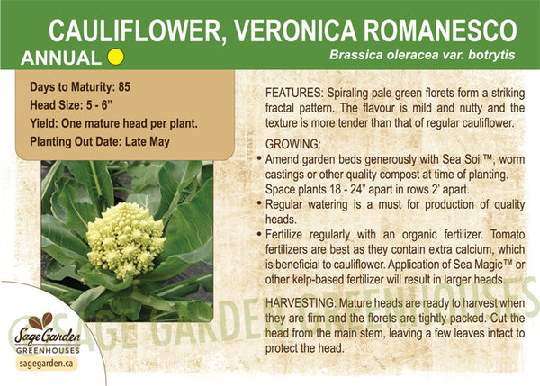 Cauliflower, Veronica Romanesco (Live Plant)