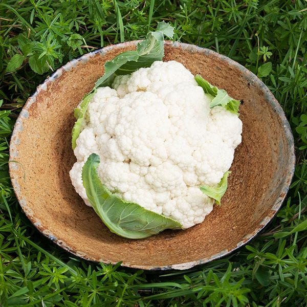 Organic Goodman Cauliflower at Sage Garden