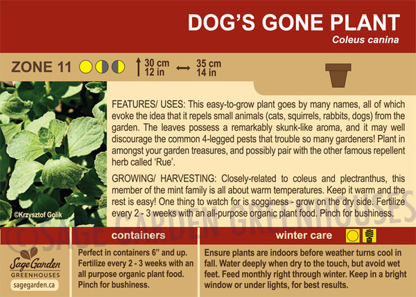Dog's Gone Plant (Live Plant)
