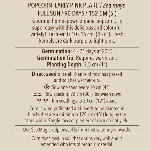 Seeds - Corn, Early Pink Popcorn OG