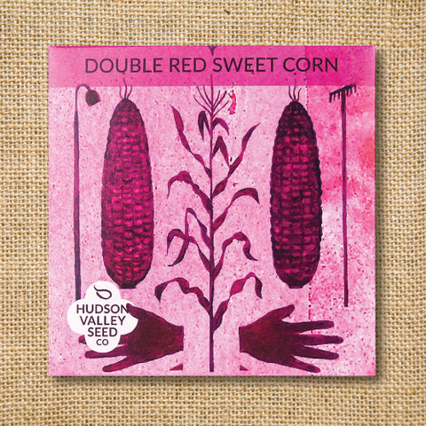 Seeds - Art Pack - Corn, Double Red Sweet (Organic)