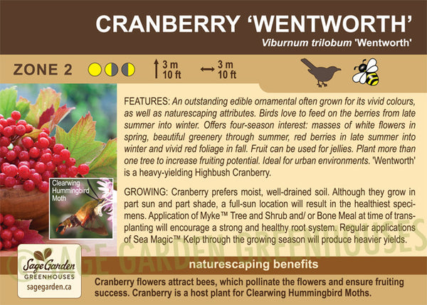 Cranberry 'Wentworth' (Live Plant)
