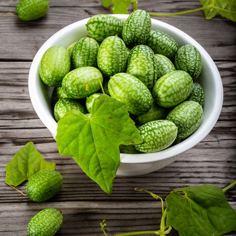 Seeds -  Mexican Sour Gherkin (Cucamelon) OG