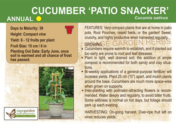Cucumber 'Patio Snacker' (Live Plant)