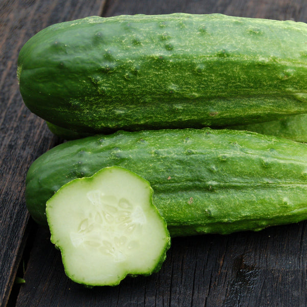 Organic National Pickling Cucumber
