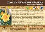 Daylily 'Fragrant Returns' (Live Plant)