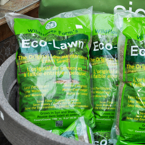 Eco-Lawn Grass Seed at Sage Garden