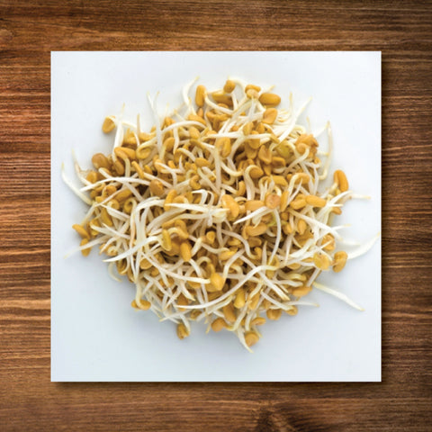 Fenugreek Sprouting Seeds - Certified Organic