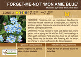 Forget Me Not 'Mon Amie Blue' (Live Plant)
