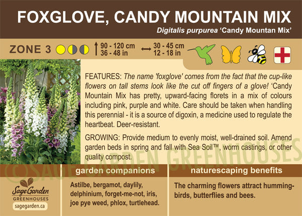 Foxglove, Candy Mountain Mix (Live Plant)