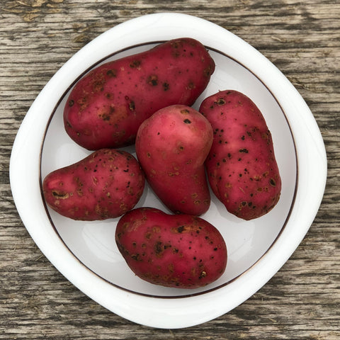 Seed Potato - French Fingerling (Certified Organic) (SPOG)