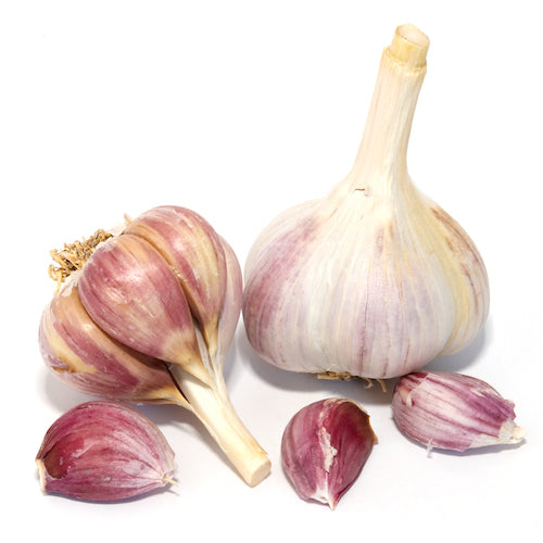 Bulbs - Garlic, Bogatyr  OG