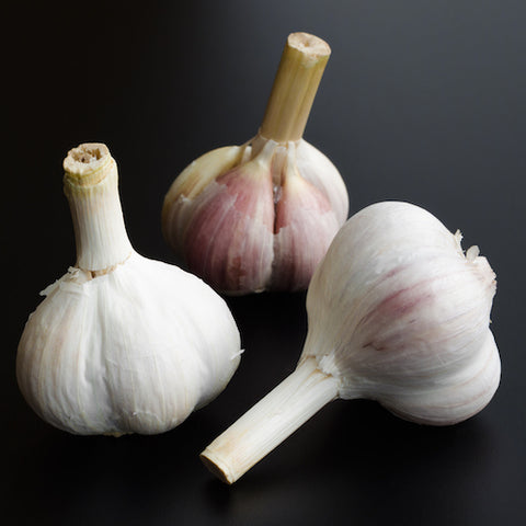 Bulbs - Garlic, Leningrad  OG