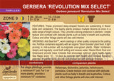 Gerbera 'Revolution Mix Select' (Live Plant)