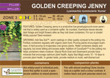 Golden Creeping Jenny (Live Plant)