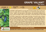 Grape 'Valliant' (Live Plant)