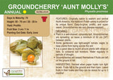 Groundcherry 'Aunt Molly's' (Live Plant)