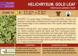 Helichrysum, Gold Leaf (Licorice Plant) (Live Plant)