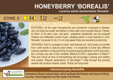 Honeyberry 'Borealis' (Live Plant)