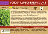 Ipomoea 'Illusion Emerald Lace' (Live Plant)
