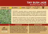 Tiny Bush Jade (Live Plant)