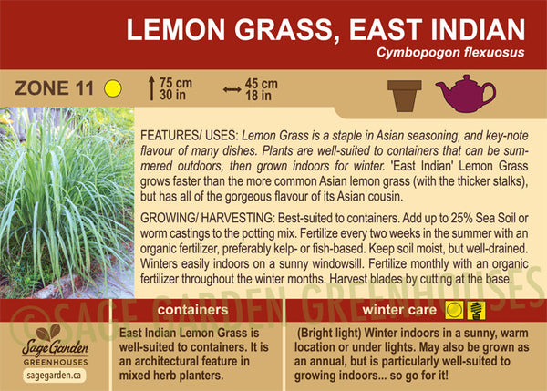 Lemon Grass, East Indian (Live Plant)