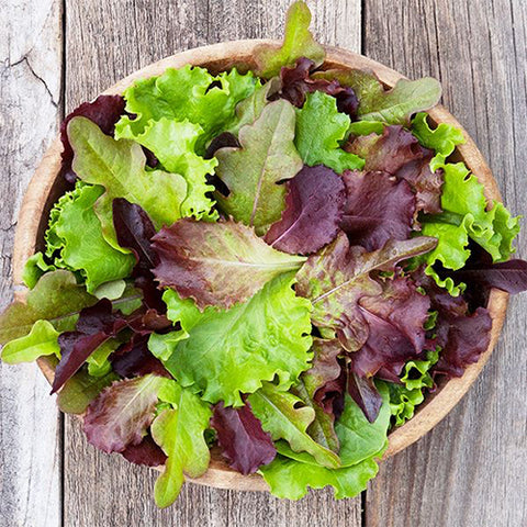 Seeds - Lettuce, DMR Salad Blend (Downy Mildew Resistant)