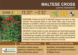 Maltese Cross (Live Plant)