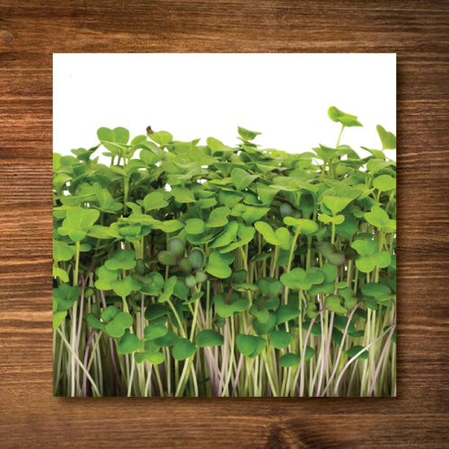 Mellow Microgreen Mix Sprouting Seeds - Certified Organic