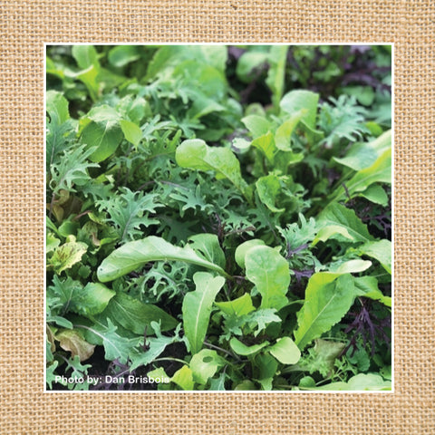 Seeds - Salad Mix, Deluxe Mesclun OG