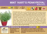 Mint 'Hart's Pennyroyal' (Live Plant)