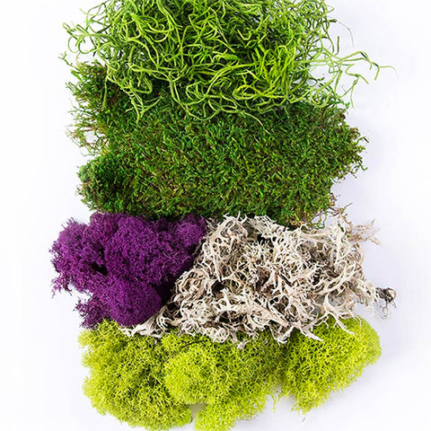 Moss Mix Assorted Best Sellers 2oz Bag