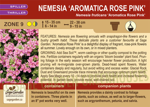 Nemesia 'Aromatica Rose Pink' (Live Plant)
