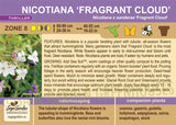 Nicotiana 'Fragrant Cloud' (Live Plant)