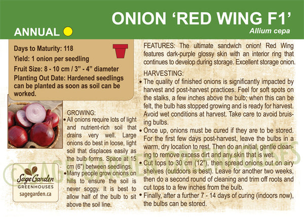 Onion 'Red Wing F1' (Live Plant)