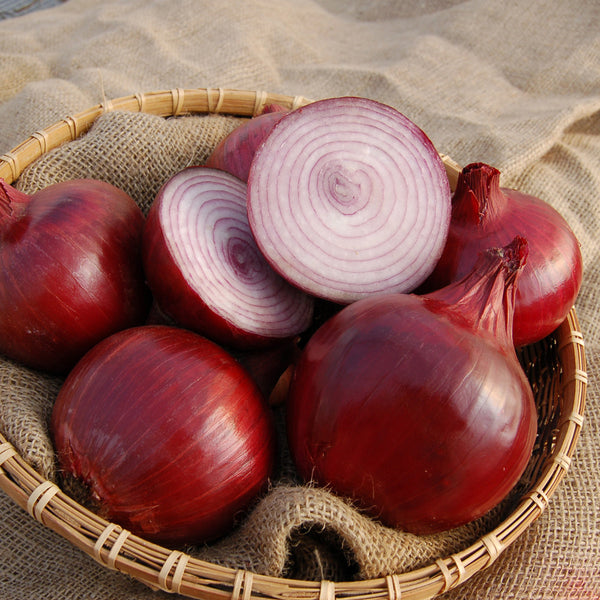 Organic Red Wing F1 Onion