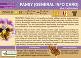 Pansy (Live Plant)